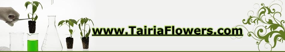 tairiaflowers.com – בלוג